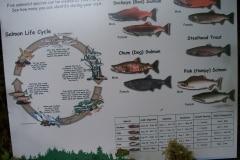 Fish Chart and cycles