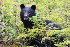 2012-09-26  Bear 031 - Copy (2)