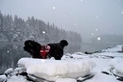 2012-01-26  Snowday, Luke Service Dog 046 2