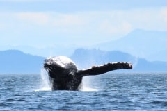 2014-07-02 whales 051
