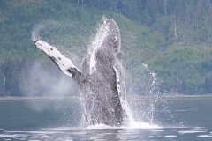 2014-07-06 whales 389
